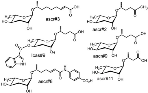 Structures of ascarosides.Structures of published ascarosides.