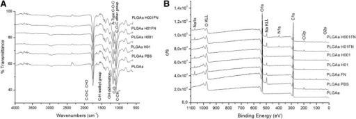 Chemical characterization of untreated, hydrolyzed, and hydrolyzed-and-coated PLGA scaffolds by (A) ATR-FT-IR and (B) XPS spectra. Control groups: PLGA scaffold immersed in PBS (PLGA PBS) and in fibronectin solution (PLGA FN) for 24 h. ATR-FT-IR, attenuated total reflectance Fourier transform infrared; XPS, X-ray photoelectron spectroscopy.