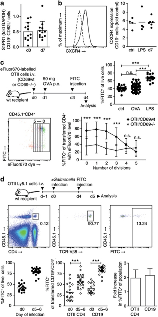 CD69-dependent and -independent lymphocyte retention mechanisms. (a) Quantitative RT-PCR analysis of sphingosine-1-phosphate receptor 1 (S1PR1) expression in fluorescence-activated cell sorting (FACS)-sorted CD19+CD62L+ cells from non-infected and day 7-infected Peyer's patches (PPs). A total of 13 (d0) and 12 (d7) samples generated in eight independent sorts. For one sample, PPs were pooled from one to two mice. Mean+s.d. of samples. (b) CXCR4 expression on CD19+ cells in PPs of non-infected (ctrl), LPS-treated (LPS), and day 7-infected (d7) mice, determined using flow cytometry. Two independent experiments, total four to six mice per group. Symbols represent PP pools from individual mice. (c) Selective retention of activated CD4+ T cells. CD69wtOTII or CD69−/−OTII cells labeled with cell proliferation dye were transferred to congenic recipients. Fifty microgram OVA were given po, PPs were fluorescein isothiocyanate (FITC)-injected on day 3 and analyzed on day 4. Symbols represent individual PPs. One-way analysis of variance (ANOVA), Tukey post test. FACS plot from CD69wtOTII transfer shows transferred CD4+ cells. Transferred CD4+ cells were subgated on division cycles. Mean+s.d. of individual PPs. Two-way ANOVA, Bonferroni post test comparing genotypes. Four experiments with total 4 (no OVA), 11 (CD69wtOTII+OVA), 8 (CD69−/−OTII+OVA), and three mice per group (LPS). (d) Retention of non-activated OTII cells. OTII cells were transferred to congenic recipients. Mice were infected or not infected and analyzed on days 5–6, 1 day after FITC injection. Left FACS plot is gated on viable PP cells, subsequent plots gated on indicated subpopulations. Two experiments, total four (d0) and six (d5–6) mice. Symbols represent individual PPs. Mann–Whitney test. Fold retention infected/non-infected PPs. Mean+s.d. of experiments.