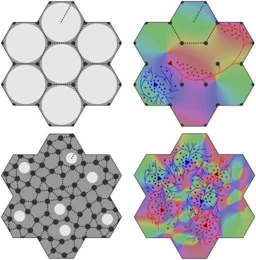 "Variation of the structure of macrocolumns at limiting extremes of the axonal lengths and cell numbers. Top left: With large long/short axon length ratio, clearly resolved hexagonal organization emerges, with macrocolumns (white) surrounded by groups of patch cells (black dots). Top right: long (red line) patch connections link ""like to like"" OP (shown as background color wheel) in contrast to highly clustered short intracortical axons (blue lines). Bottom left and right: near-complete loss of resolution when long/short axon ratio approaches 1."
