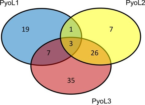 Venn diagram describing L pyocin susceptibilities of 150 Pseudomonas aeruginosa strains. About one-third of strains (52) in the test panel was not inhibited by PyoL1, PyoL2 or PyoL3.