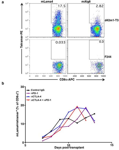 CD8+ T cells specific for mutant forms of Lama4 and Alg8 infiltrate d42m1-T3, but not F244, tumoursa, Detection of tumour infiltrating mLama4- or mAlg8-specific T cells infiltrating d42m1-T3 or F244 tumours of mice treated with αPD-1. Tumours were harvested on day 12 post-transplant. Cells were gated on live CD45+ and CD8α+ tumour infiltrating lymphocytes. Detection of mLama4- or mAlg8-specific T cells was achieved by staining with peptide-MHC H-2Kb PE-labelled tetramers. Data are representative of at least five independent experiments. b, Detection of mLama4-specific tumour infiltrating T cells from tumour-bearing mice treated with αPD-1, αCTLA-4, both αPD-1 plus αCTLA-4 or control mAb. Detection of mLama4-specific T cells was achieved by staining with mLama4-MHC H-2Kb PE-labelled tetramers. Data presented are plotted as the mean mLama4 tetramer-positive as a percent of CD8α+ tumour infiltrating cells and are representative of at least three independent experiments.