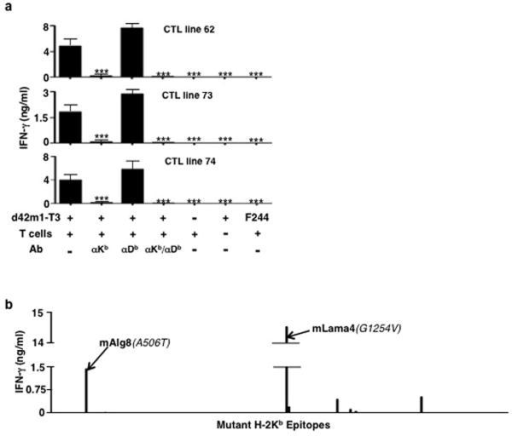 mLama4 and mAlg8 stimulate CD8+ T cell lines generated against d42m1-T3 following αPD-1a, CD8+ T cell lines generated from splenocytes of individual d42m1-T3 tumour bearing mice that rejected their tumours after αPD-1 therapy were incubated with irradiated d42m1-T3 tumour cells (or F244 tumour cells) treated with blocking mAb specific for H-2Kb, and/or H-2Db and IFN-γ production quantitated. Data are presented as means ± s.e.m and are representative of two independent experiments. Samples were compared using an unpaired, two-tailed Student's t test (***p<0.001). b, IFN-γ release by the CTL 74 T cell line following co-culture with naïve irradiated splenocytes pulsed with the top 62 H-2Kb synthetic peptides added at 1 μM final concentration.