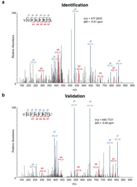 Identification of a peptide bound to H-2Kb on d42m1-T3 tumour cells corresponding to mutant Lama4a, Identification of the peptide, VGFNFRTL, corresponding to mLama4 by discovery MS. b, Validation of the mLama4 peptide using an isotope-labelled synthetic peptide (VGFNFRTL (13C6, 15N1)).
