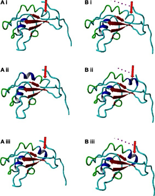 Conformation of RBM10v1 RRM2. The RBM10 RRM2 conformation was modeled using SwissProtKB (A) or Phyre2(B). (i) Isoforms V354. (ii) Isoforms V354E. (iii) Isoforms V354del. Arrow indicates the position of the +/− valine. Yasara structure colors indicate beta-sheets (red), alpha-helixes (dark blue), turns (green) and random coils (cyan).