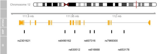 A concise genomic map for seven SNPs within ATXN2 using UCSC database.At the top, the relevant chromosome is drawn with the subregion of interest marked in red. The 'ATXN2' track shows the combined gene model of the alternative transcripts of the ATXN2 gene. At the bottom, the SNPs' location and ID are plotted along the same genomic coordinate. > library(TxDb.Hsapiens.UCSC.hg19.knownGene) > msb(M = snp, start = 111950277, end = 112036294, geneTrName = 'ATXN2').