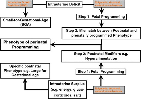 Concept of fetal and perinatal programming the mismatch hypothesis may only be applied to the intrauterine deficit situation, not to the intrauterine surplus.