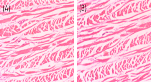 Histological photomicrographs of eosin–hematoxylin-stained nasal mucosa (10× magnification). (A) Control mucosa without application of formulation; (B) nasal mucosa after application of nimodipine in situ gelling mucoadhesive microemulsion.