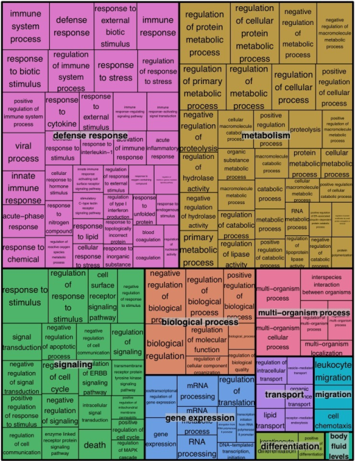 REVIGO treemap summarizing gene ontology biological process categories over-represented in WNS-affected tissues.GOrilla was used to identify Gene Ontology Biological Processes that were over-represented among transcripts more highly expressed in WNS-affected tissues at an FDR cutoff of 0.1 (S6 Table). Over-represented categories with p values of less than 0.001 (290 terms) were used to generate a treemap colored by functional category. The size of each rectangle is proportional to the p value for that category.
