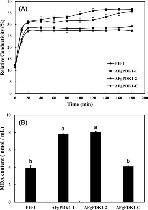 Relative conductivity (a) and MDA content (b) of mycelia in PH-1, the FgPDK1 deletion mutant (ΔFgPDK1), and the complemented strain (ΔFgPDK1-C). The mean values of three replicates followed by different letters indicated significance of difference between the treatments (P<0.05, ANOVA, LSD).
