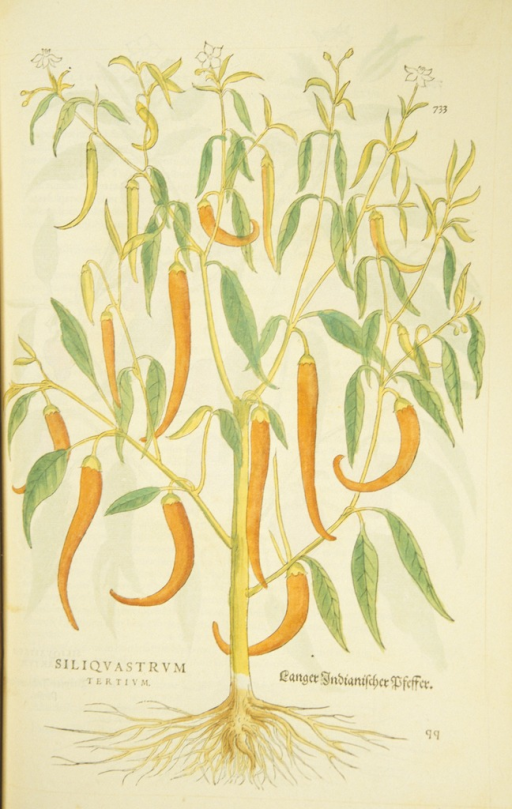<p>Hand-colored woodcut of the pepper plant.</p>