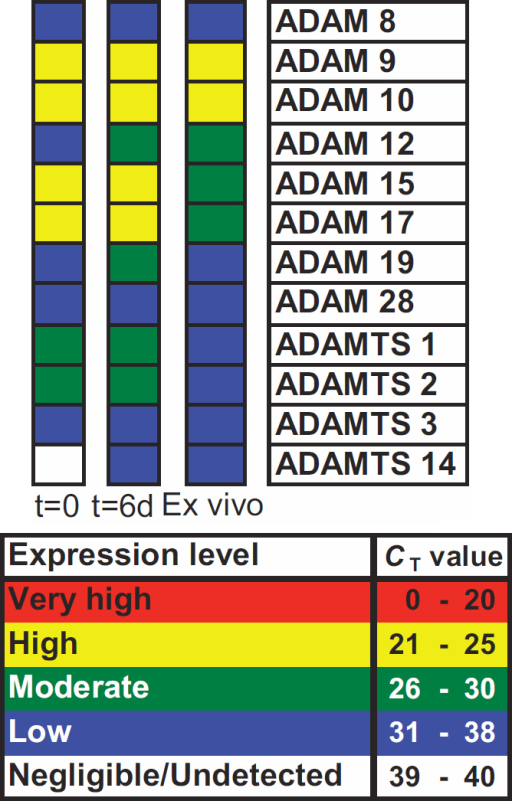 ADAM/ADAMTS gene expression in response to mechanical trauma. Gene expression profiles were classified in CBs; at t=0 following in vitro sham cataract operation (left panel), at t=6d, following short-term culture (central panel) and ex vivo after cataract surgery (right panel). The cycle threshold number (CT) was used to classify gene expression as either very high (CT≤20), high (CT=21–25), moderate (CT=26–30), low (CT=31–38), or negligible to undetected (CT=39–40). Donor information; category (t=0, 6d, ex vivo), sex (F; female, M; male), age and ophthalmic history. t=0: F, 74, none; M, 83, none; M, 81, none. t=6d; M, 76, none; F, 76, none; M, 69, no info. Ex vivo; M, 75, bilateral cataract surgery 2001; F, 76, no info; M, 70, no info.