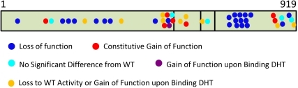 Summary of the distribution of the different classes of mutation along the AR protein.