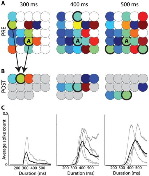 "Decoding synchrony patterns in a heterogeneous population.Each column corresponds to one stimulus duration. A, Color represents the latency of the spike produced by each neuron responding to the stimulus (white if the neuron did not spike). Thus, neurons with the same color are synchronous for that specific stimulus (duration). The population can be divided in groups of synchronous neurons (i.e., with the same color), forming the ""synchrony partition"". Circled neurons belong to the synchronous group of neuron A. B, Each synchronous group projects to a postsynaptic neuron. Each duration is associated with an assembly of postsynaptic neurons. C, Activation of the postsynaptic assembly as a function of duration (grey: individual neurons; black: average)."