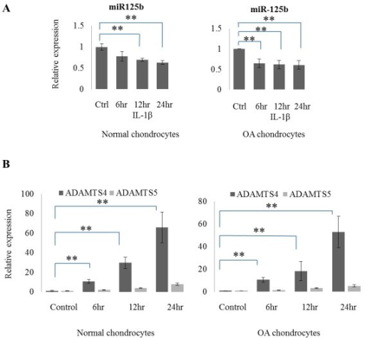 IL-1β induces ADAMTS-4 expression and suppresses miR-125b expression. (A) Relative expression of miR-125b in normal (n = 3) and osteoarthritic (OA) (n = 7) chondrocytes stimulated with IL-1β for 24 hours. (B) Kinetics of expression of mRNA of ADAMTS-4 and ADAMTS-5 in normal (n = 3) and OA (n = 7) chondrocytes treated with IL-1β for 6, 12 and 24 hours. The data are expressed as mean and SEM of three independent experiments, each of which was run in triplicate. ** = P <0.001 as measured using an unpaired Student's t test. ADAMTS-4, aggrecanase-1; SEM, standard error of the mean.