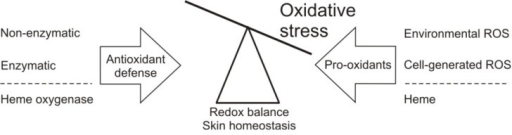 Redox balance maintenance in skin. ROS in the skin originate from normal cellular metabolism, e.g., mitochondrial respiration, and enzymatic activity. Besides, exogenous ROS are generated following physical insults, like UV light or persistent presence of leukocytes, facilitating chronic inflammatory skin conditions. To regulate ROS levels, the skin is rich in enzymatic and non-enzymatic antioxidant defense systems, thereby maintaining physiological homeostasis. In addition to the classical antioxidant defense, the cytoprotective enzyme heme oxygenase exhibits antioxidant properties via its degradation of pro-oxidant heme and generation of its antioxidant effector molecule bilirubin.
