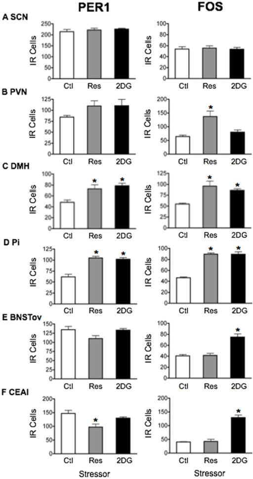 The effect of acute nighttime stress on PER1 and FOS expression.Rats were exposed to 30 min restraint or treatment with 250 mg/kg 2DG, administered during the nighttime at ZT14, and then killed at ZT15. Means ± SEM of immunoreactive (IR) cells are shown, n = 4 per group; * significant difference from corresponding control group, p<0.05.