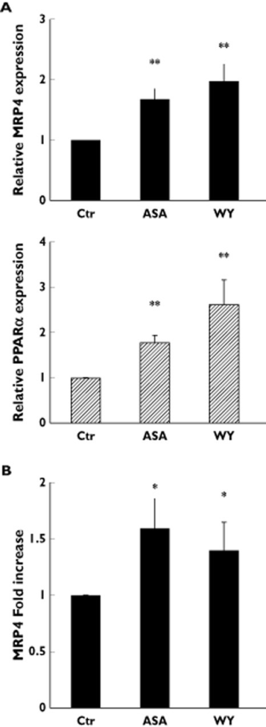 Aspirin stimulates endogenous MRP4 expression in megakaryocytes. (A) Q-RT-PCR analysis of endogenous MRP4 and PPARα expression in MKs, derived from HPC grown, in mock culture (Ctr), and grown the presence of either 50 μm aspirin (ASA) or 1 μm PPARα agonist, WY14643 (WY). Data were normalized with GAPDH expression and reported as mean ± SD of three experiments **P < 0.01; t-test). (B) Densitometric analysis of MRP4 protein expression in platelets derived from culture grown MKs in mock culture (Ctr) and in the presence of either 50 μm aspirin (ASA) or 1 μm PPARα agonist, WY14643 (WY). Data, normalized with actin expression, were reported as mean of fold increase ± SD, compared with Ctr (n = 3; *P < 0.05; t-test)