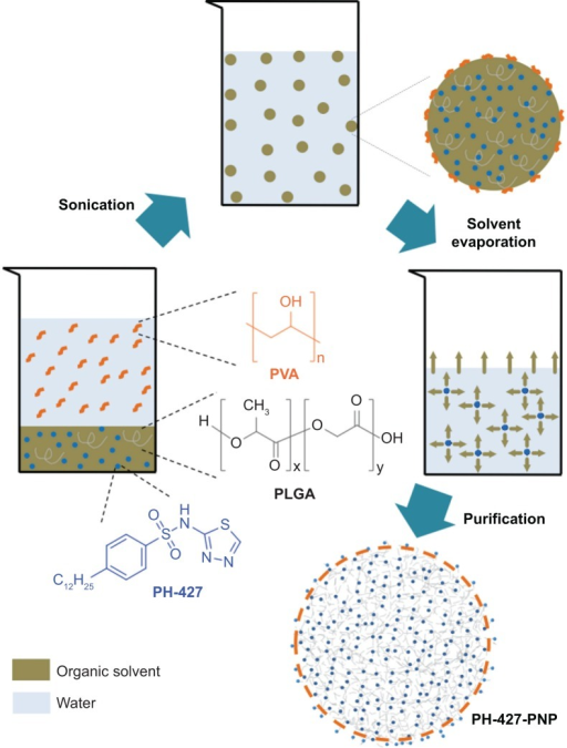 Schematic of the procedure for creating PLGA polymeric nanoparticles loaded with the PH-427 chemotherapeutic agent (PH-427-PNP). Emulsification in dichloromethane and water was facilitated by sonication, followed by solvent evaporation and purification using centrifugation.Abbreviations: PLGA, poly(lactic-co-glycolic acid); PVA, poly(vinyl alcohol); PNP, PLGA polymeric nanoparticles.