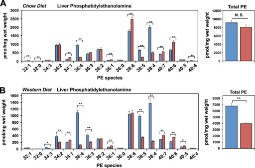 Lpcat3 is required for the incorporation of arachidonate into phosphatidylethanolamine in mouse liver.(A–B) ESI-MS/MS analysis of the abundance of phosphatidlyethanolamine (PE) species in livers from Lpcat3fl/fl (Flox/Flox) and Lpcat3fl/flAlbumin-Cre (L-Lpcat3 KO) mice fed on a chow diet (A) and a western diet (B).DOI:http://dx.doi.org/10.7554/eLife.06557.014