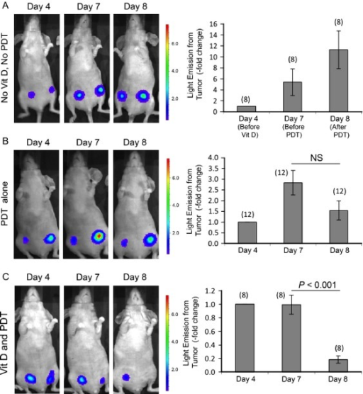 Noninvasive monitoring of treatment responses in breast cancer tumors. Photographs illustrate typical changes in individual mice; BLI signal superimposed upon white light image. (A) Control mouse that received neither Vit D treatment nor ALA-PDT; (B) mouse that received only ALA-PDT; (C) mouse that received both Vit D treatment for 3 days followed by ALA-PDT on fourth day. Graphs quantify relative change in radiance (photons sec−1 cm−2 sr−1). Mean ± SEM; number of tumors per treatment group in parenthesis. P values from paired two-sided t-tests. NS, not significant; BLI, bioluminescence imaging; ALA, 5-aminolevulinate; PDT, photodynamic therapy.