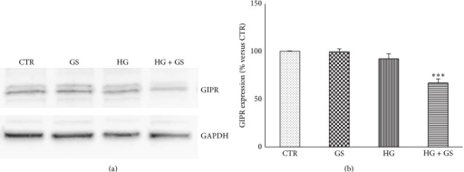 Treatment with GS reduces GIPR protein expression in cells cultured under HG. HIT-T15 cells were cultured for 5 days in media containing 5.6 mmol/L (CTR) or 11.1 mmol/L glucose (HG) supplemented with GS. Then cells were lysed and tested for protein expression of GIPR. (a) Representative western blot analysis. (b) Quantification of densitometries of western blot bands. Data were expressed as mean ± SE of fold induction relative to GAPDH (n = 3). ∗∗∗P < 0.001 versus CTR.