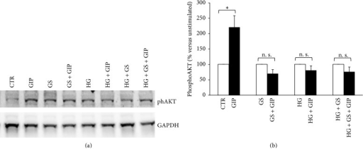Treatment with GS abrogates GIP-induced phosphorylation of AKT (Ser473) at both low and high glucose concentration. After 5-day treatment in the presence of standard medium (CTR) or high glucose concentration (11.1 mmol/L) (HG) in presence of glycated serum (GS), HIT-T15 cells were incubated for 2 hours in serum-free medium and then stimulated with 100 nmol/L GIP for 5 min (dark bars). (a) Representative western blot analysis. (b) Quantification of densitometries of western blot bands. Data were expressed as mean ± SE of fold induction relative to GAPDH (n = 3). ∗P < 0.05 versus absence of GIP; n. s.: nonsignificant.