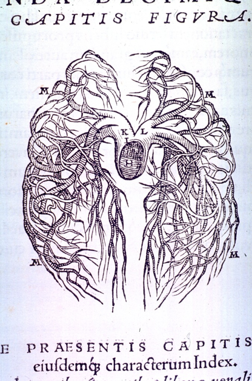 <p>Arterial circulation to the lungs.</p>