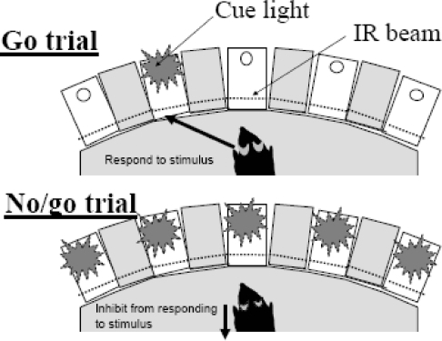 Schematic of the 5C-CPT stimuli.Example of the two trial types in the 5C-CPT. Go trials (relevant stimuli) appear 83% of the time, and the mouse must respond to the stimulus by nose-poking beyond the infra-red (IR) beam in the location of the cue stimulus. Cue stimuli can appear in any one of the five locations. No/go trials (irrelevant stimuli) occur 17% of the time, all five cue lights come on, and the mouse must inhibit from responding in any of the five locations.
