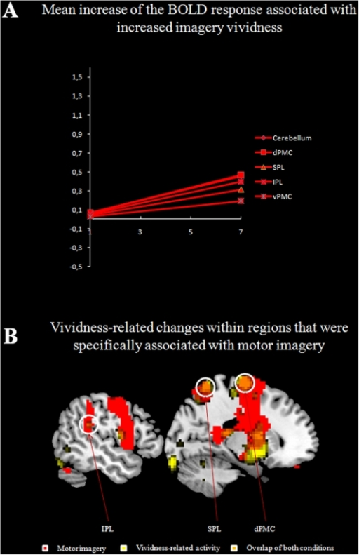 Mean increase of the BOLD response associated with increased imagery vividness (A).Brain areas showing increased activation during motor imagery and as a function of imagery vividness (B).