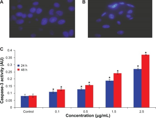 Increase in chromosome condensation and caspase-3 activity in human hepatocellular carcinoma cells after exposure to arsenic trioxide for 24 and 48 hours. (A) Control cells, (B) cells exposed to 2.5 μg/mL of arsenic trioxide, and (C) caspase-3 activity.Notes: Each value represents the mean ± standard error of three experiments. *P < 0.01 versus control.Abbreviation: AU, arbitrary units.