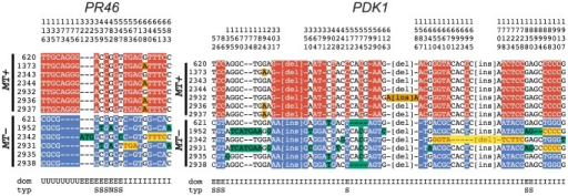 R-domain gene conversion between MT+ and MT− haplotypes.Polymorphic positions in alignments of R-domain genes PR46 and PDK1 from 7 MT+ and 6 MT− isolates described in Table S7. The position in the alignment is displayed vertically above each column reading downward. The domain (dom) of the gene in which the polymorphism occurs is indicated below each column as follows: E (exon), I (intron) and U (untranslated region). For exonic positions the type of substitution (typ) is indicated as synonymous (S) or non-synonymous (N). Small insertion/deletion polymorphisms are indicated by dashes, while larger insertion/deletion polymorphisms are abbreviated as [ins] or [del]. Red background shading indicates polymorphisms specific to MT+ isolates and blue background shading indicates polymorphisms specific to MT− isolates. Bold red sequences with yellow background shading show gene tracts where MT− sequences converted to MT+. Orange and green shading show polymorphisms segregating within MT+ and MT− subgroups.