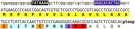 Nucleotide sequence of the putative promoter and first coding exon of various Locusta vasopressin genes. The TATA box and a near perfect copy of the first motif of the Drosophila core promoter (Ohler, 2006) are emphasized, while the putative intron donor splice site is in bold italics. The conceptually translated protein is indicated below the DNA sequence and the predicted signal peptide is highlighted in yellow, the convertase cleavage site in red, the glycine residue transformed into the C-terminal amide in purple, the vasopressin-like sequence in light blue and the two cysteine residues that will form the disulfide bridge in orange.