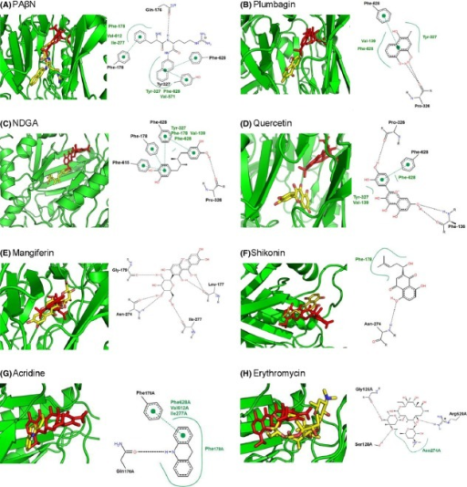 Docking of phytochemicals and substrates onto AcrB (PDB: 4DX5, tight monomer). Positions of the examined ligands (yellow) compared to minocycline (red) are given in the left-hand pictures, while the interaction of the amino acids with the ligands is given on the right-hand side in each picture.