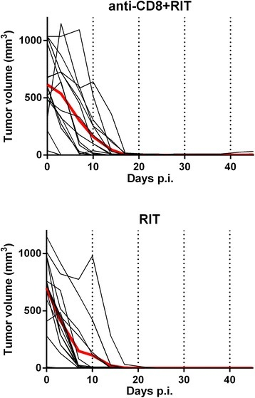 Tumor volume growth after treatment. Individual (black) and average (red bold) tumor volumes in animals treated with anti-CD8 + RIT (above) and in animals treated with RIT only (below).