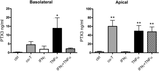 PTX3 secretion from ARPE-19 cells is primarily increased in the apical direction following basolateral inflammatory treatment.Pigmented monolayers of ARPE-19 cells grown on membrane inserts were exposed to CD3/CD28-activated human T cells (co-T) or recombinant cytokines basolaterally. Media was collected from apical and basolateral compartments, and PTX3 was quantified using ELISA. *, P<0.05; **, P<0.01 in repeated measures one-way ANOVA with Dunnett's multiple comparison. Bars represent mean values from seven independent setups, error bars represent standard error of the mean.