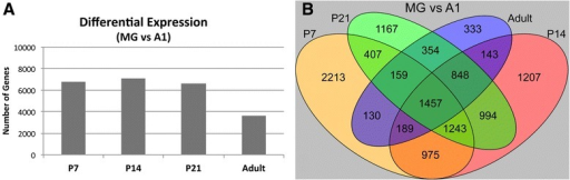 Differential expression in A1 and MG. a The total numbers of differentially expressed genes between A1 and MG are plotted for each postnatal age. b Overlapping differential expression in A1 and MG. The Venn diagram depicts the total numbers of genes that were differentially expressed (MG vs A1) at only one postnatal age, and the numbers that were commonly expressed in all age group combinations. See text for proportions