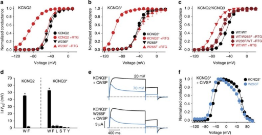 Multiple retigabine molecules modulate KCNQ2 and KCNQ3 channel subunits via an S5 Trp side chain.(a,b) Conductance–voltage relationships for (a) KCNQ2 (n=3) and KCNQ2[Trp236Phe] (n=6), and (b) KCNQ3* (n=5) and KCNQ3*[Trp265Phe] (n=3) homomeric channels along with indicated mutants (retigabine concentration of 100 μM). (c) Conductance–voltage relationships for heteromeric combinations of KCNQ2 and KCNQ3 (1:1 ratio of injected mRNA, with or without Trp→Phe mutations as indicated, n=5 for each combination), used to generate channels with reduced numbers of retigabine binding sites. (d) Summary of V1/2 shifts in saturating 100 μM retigabine for mutations of KCNQ2 Trp236 and KCNQ3 Trp265 as indicated (*P<0.05 in a paired Students t-test comparing control versus 100 μM retigabine in each experimental oocyte, n=3–6 per mutant). Only a Trp at either position is sufficient for retigabine sensitivity. (e) Exemplar currents of KCNQ3* and KCNQ3*[Trp265Phe] mutant coexpressed with CiVSP, illustrating that the Trp side chain responsible for retigabine sensitivity is not required for PIP2 sensitivity. (f) Summary data of tail current magnitude (−20 mV) after prepulses to a range of voltages, in oocytes expressing KCNQ3* (n=5) or KCNQ3*[Trp265Phe] (n=5) channels, along with CiVSP. In all panels, error bars represent s.e.m.