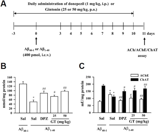 Effect of gintonin (GT; 25 or 50 mg/kg, p.o.) on the Aβ (1–40)-induced changes in cholinergic system. (A) Experimental schedule to evaluate acute gintonin effect in Aβ (1–40)-induced cholinergic system impairment. Donepezil (DPZ; 1 mg/kg, i.p.) was used as a reference drug. Gintonin or DPZ administration started 3 days before the Aβ i.c.v. injection, and the drug administration was continued once a day for consecutive 14 days. Mice were sacrificed at 1 day after the final treatment with gintonin or DPZ. (B) Acetylcholine level. (C) Acetylcholinesterase activity and choline acetyltransferase activity in the hippocampus of the mouse. Sal = saline. Each value is the mean ± S.E.M of eight mice. *P < 0.01 vs. Sal + Aβ (40-1), #P < 0.05, ##P < 0.01 vs. Sal + Aβ (1–40) (one-way ANOVA followed by Fisher's PLSD test).