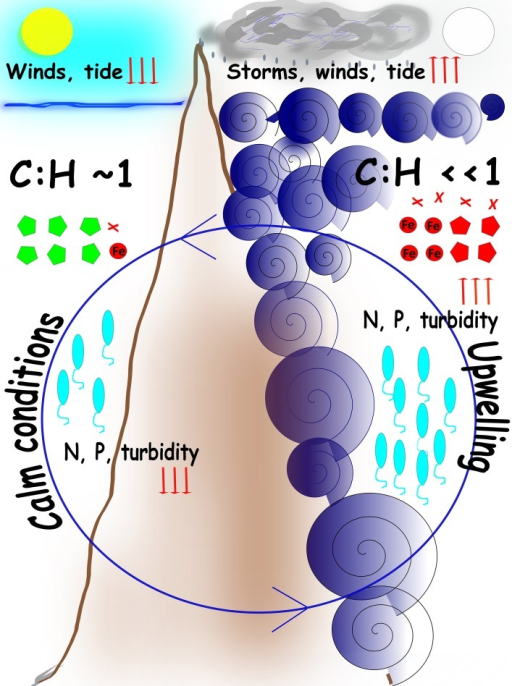 Cartoon model of the main processes in SPSPA Cyclic turbulence-nutrient pulses determine transient shifts in the bacterioplankton. Circular central blue arrow indicates the cyclic nature of the events. Left panel: during LLR calm tides, weak winds, absence of clouds, and clear waters correlate with lower levels (downwards red arrows) of nitrogen (N) and phosphorous (P), and equivalence between autotrophy and heterotropy, represented by the ratio cyanobacteria:heterotrophs (C:H) equalizing 1. Cyanobacterial phages (green poligons) reflect the abundance of the hosts. Right panel: during HHR harsh conditions are determined by violent turbulence resulting in upwelling and enrichment, represented by high levels (upwards red arrows) of N and P, and a shift to heterotrophy dominance, represented by a low ratio cyanobacteria:heterotrophs (C:H < < 1). Intense winds, cloudiness and rain, that washes the rocks covered with guano, contribute to enrichment and the shift to heterotrophy. Proteobacterial phages (red poligons) reflect the abundance of the hosts as well as Iron acquisition (red circle) and virulence factor (red crosses) genes. Vibrios abundance (blue elipses) reflect seawater parameters. Episodic surges frequently correlate with full moon. When turbulence pulses mitigate and weather assuages a recovery takes place in seawater, both in terms of nutrients concentrations and microbial assemblages (e.g., after moon changes toward new).