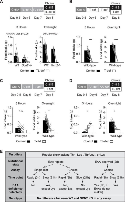 Mice Attain the Ability to Rapidly Identify Threonine- or Leucine-Deficient Diets following EAA Deprivation(A) Wild-type (n = 7) and Gcn2−/− (n = 8) mice deprived of threonine and leucine for 2 days consumed less novel TL-def food than novel control after 3 hr of feeding (p = 0.01) and overnight (p < 0.0001), with no significant effect of genotype or interaction between diet and genotype.(B) Wild-type mice (n = 7) deprived of threonine for 2 days consumed significantly less T-def food than control in the first 3 hr of feeding (p = 0.0002) and overnight (p < 0.0001).(C) Wild-type mice (n = 9) deprived of leucine for 2 days showed no significant preference for T-def or control food after 3 hr of feeding. However, they consumed significantly more control food than T-def food overnight (p = 0.02).(D) Wild-type mice (n = 4) deprived of all amino acids for 2 days consumed more TL-def food than control after 3 hr of feeding (p = 0.04). Overnight, this trend reversed, and mice consumed significantly more control than TL-def food (p = 0.0257).(E) Summary of behavioral data related to dietary EAA sensing.