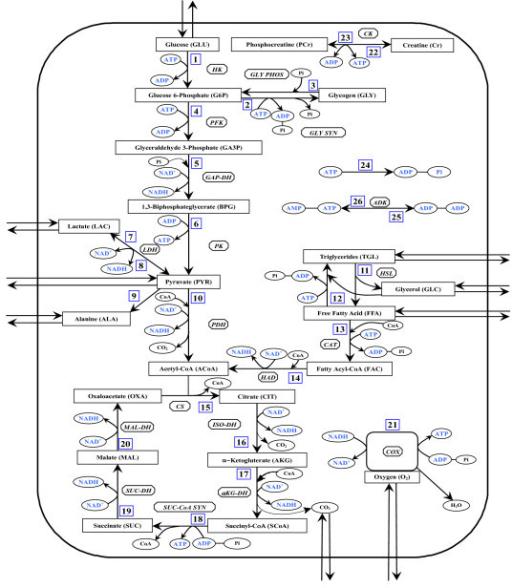 schematic diagram of biochemical pathways depicting var