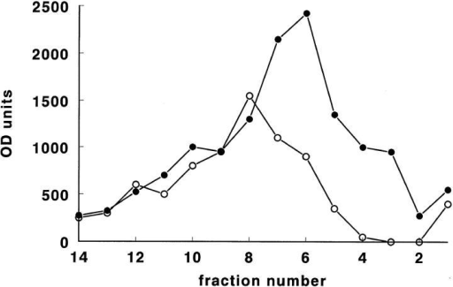 Distribution of P-selectin–reactive material, as determined by Western blotting and densitometric scanning, in Nycodenz gradient centrifugation fractions of homogenates from control (○) and thrombin-treated (•) HUVEC cultures. Cell culture  and preparatory conditions were as in Fig. 5. Note the increase in  P-selectin immunoreactive material in fractions 2–8 after thrombin treatment.