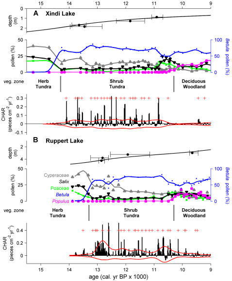 Fire and vegetation reconstructions from northcentral Alaska.Chronology, pollen stratigraphy, inferred vegetation, and high-frequency variations in charcoal accumulation rates (CHARs) from (A) Xindi Lake and (B) Ruppert Lake. Pollen percentage curves are smoothed to 500 years and color coded. CHAR records represent residuals after removing 500-year trends, and red lines around CHAR = 0 are thresholds identifying noise-related variations. Red plus marks identify CHAR peaks exceeding the positive threshold (and a minimum-count screening; see Materials and Methods) and are interpreted as local fire events. At both sites CHARs and CHAR peaks increase distinctly with the rise in Betula pollen percentages, marking the transition from the Herb Tundra Zone to the Shrub Tundra Zone.