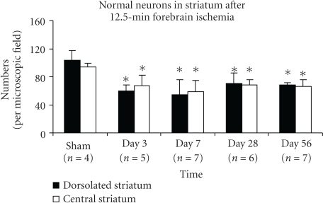 The number of normal (i.e., vital) neurons in the striatum decreases rapidly after global ischemia. Bar graph shows normal neurons (mean ± SD) significantly decreased in rat striatum at days 3–56 after 12.5 minutes of transient forebrain ischemia, per high-power (40 ×) microscopic field (*indicates the significant difference, ischemic versus sham groups, p ≤ .03, ANOVA, post hoc Tukey HSD).