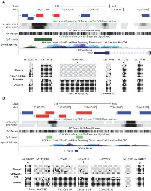 Local mapping of the imprinted C3orf27-RPN1 and VTRNA2-1 DMRs shows precise overlap with CTCF binding sites.A, Bis-seq of heterozygous placenta samples for amplicons immediately downstream of the RPN1 gene shows ASM localized to a discrete region of about 1 kb in length (chr3: 128,336,485–128,337,414) spanning a strong CTCF binding site and a CGI. Amplicons with ASM are colored red. B, Bis-seq of heterozygous PBL samples for amplicons surrounding the VTRNA2-1 vault RNA gene shows ASM localized to a 1.9 kb region (chr5: 135,414,670–135,416,821) spanning one CTCF binding site, two small CGIs, and the VTRNA2-1 RNA gene, while another CTCF binding site upstream is hypomethylated. ASM for both genes was evaluated visually and by T-tests on the percent methylation of individual clones, comparing the sets of clones for the two alleles.