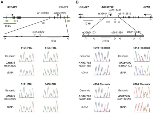 Non-imprinted ASM in the STEAP3-C2orf76 region and imprinted ASM in the RPN1-C3orf27 regions are both associated with ASE.A, ASE of the C2orf76 gene, associated with the C2orf76-STEAP3 DMR, is shown in duplicate for four PBL samples (rs6542522). In each case the C allele is preferentially expressed in the cDNA when compared to the genomic DNA, consistent with the sequence dependent nature of ASM in this locus. Overall, 12 informative PBL samples were analyzed in duplicate for ASE and 7 PBL samples showed preferential expression of the C allele. Likewise, preferential expression of the C allele was identified in 7 out of the 22 informative liver samples (data not shown). B, ASE of the lncRNA corresponding to the AK097792 EST, overlapping the index SNP rs2811488 in the RPN1-C3orf27 intergenic DMR are shown on the left and those overlapping two additional informative SNPs, i.e. rs35604103 and rs61112519, are shown on the right for four placenta samples. Overall, the assays were performed in duplicates for 13 informative placenta samples. Ten of them showed a definite or complete ASE. In each of 6 informative samples assayed for both ASE and ASM, the hypermethylated maternal allele was the relatively repressed one.