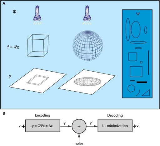 The Compressed Sensing framework. (A) The essence of the CS framework can be conceived if we consider the example of the wire-frame object (Ganguli and Sompolinsky, 2012). The three-dimensional object (e.g., a wire-frame cube or a wire frame sphere) is projected onto a two dimensional screen when a light beam is applied on it. The wired frame represents the f signal, the light beams the sampling process (Φ) whereas different shadows correspond to different samples of the signal (vector y). CS shows that it is possible to reconstruct the initial wire frame (e.g., the cube or the sphere) from a set of different shadows, as long as the wire frame is sparse enough and the sampling is random. For instance, consider a non-random lighting where the light beams are aligned with a specific wire of the object. The shadows would be biased to that wire and, as a result, not representative of the higher dimensional structure of the object. Moreover, in the case where the wire-frame object has dense wiring (i.e., not sparse), all shadows would be almost the same no matter what the lighting angle was. The basis Ψ (blue box) includes items that can be used to reconstruct signal f (the wired-object) as dictated by vector x, which is produced by the L1 minimization algorithm subject to measurements y (shadows). (B) CS encoding and decoding schemes. The encoding of the signal is a simple, linear sampling/measurement process derived as y = Ax, where A is analyzed as A = Φ Ψ. Thus, the decoding process is performed by knowing A and vector y′, which is a noisy version of y. CS theory provides mathematical proofs that, knowing y′ and A, it is possible to retrieve x or x′ ≈ x by a L1 minimization procedure.