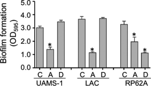 Relative impact of aureolysin and dispersin B on biofilm formation. Biofilm formation was assessed in the S. aureus strains UAMS-1 and LAC and the S. epidermidis strain RP62A without any additives (C) or after the addition of aureolysin (A) (62.5 nmol/L) or dispersin B (D) (5 μmol/L). Asterisks indicate statistical significance by comparison to the isogenic parent strain.