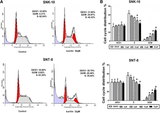 Icaritin induces cell cycle arrest at G2/M phase in ENKL cells. Cell cycle distribution of SNK-10 and SNT-8 cells was analyzed by flow cytometry with PI staining after 48 h treatment. A. Representative flow cytometry histograms. B. Cell distribution at G0/G1, S, and G2/M phases of the cell cycle (n = 3). *p < 0.05, #p < 0.01 vs control.